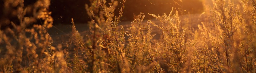 cereals-lens-flare-nature-2522